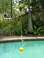 An example of rope and float in a pool. Tie one end to a tree or stake. This provides the koala a way to climb out if they fall in.